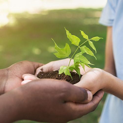 Como sanar el planeta